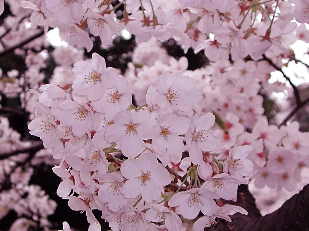 Flower1005